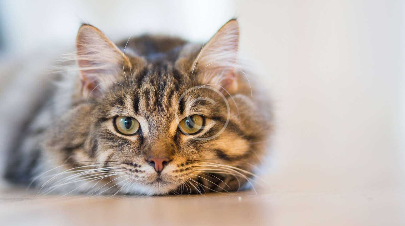 Why should your pet have their teeth  cleaned?